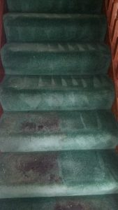 carpet cleaning ballincollig